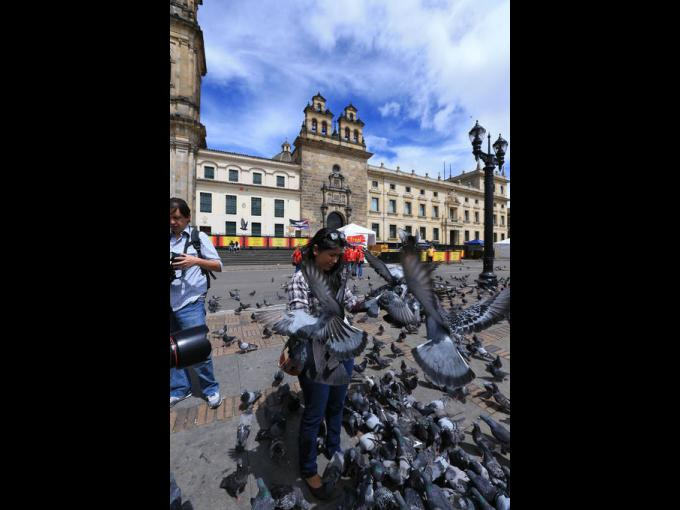 Las palomas no le temen a los turistas.