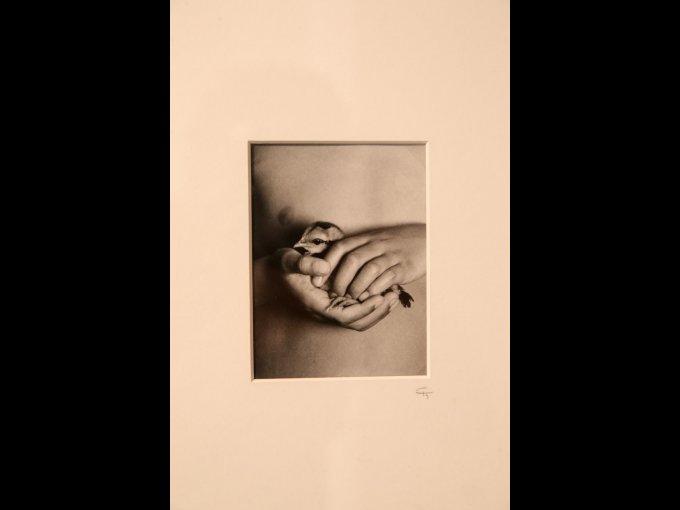 Ofrenda, 2003