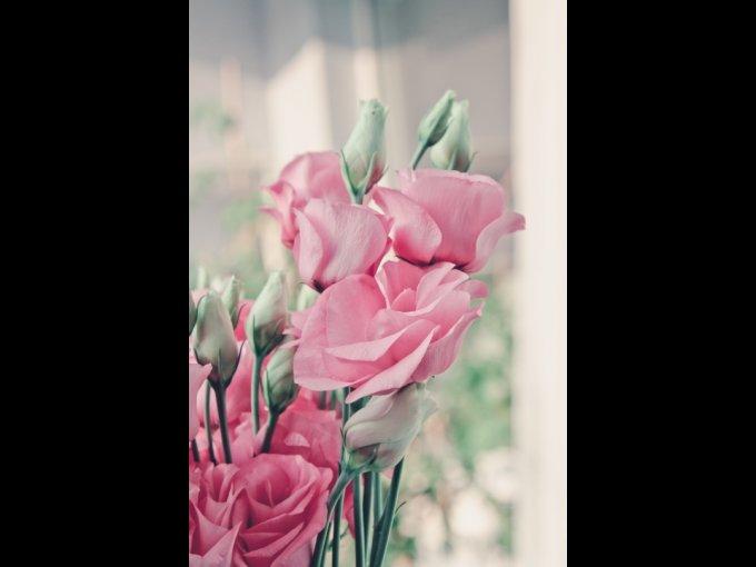 El color de estas flores es la máxima expresión de la dulzura.