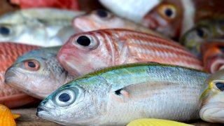 ¿Cómo identificar un pescado en mal estado? ¡Evita enfermarte!